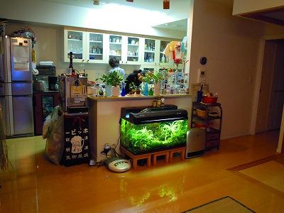 2011-01-08 006.jpg